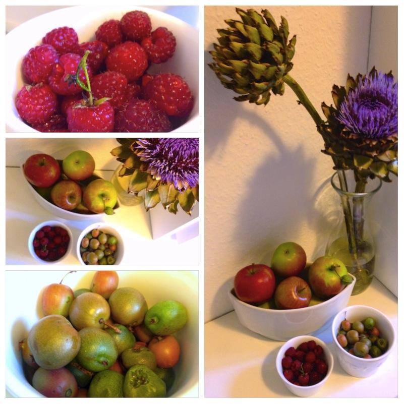 Zwischen Apfel- und Pflaumenbäumen