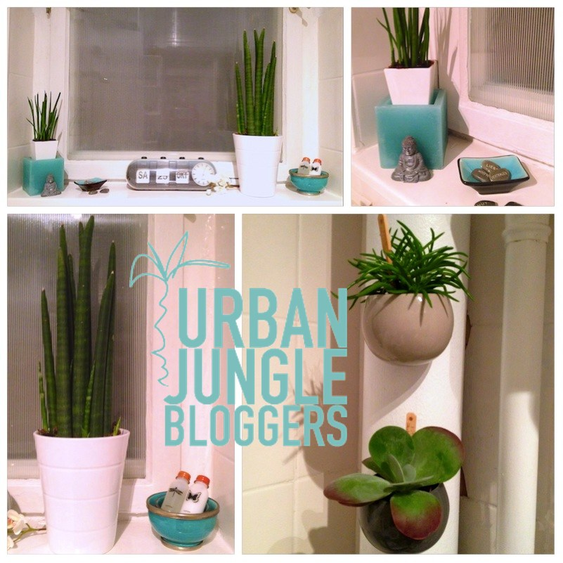 Urban Jungle Bloggers - My Plant Shelfie3_1