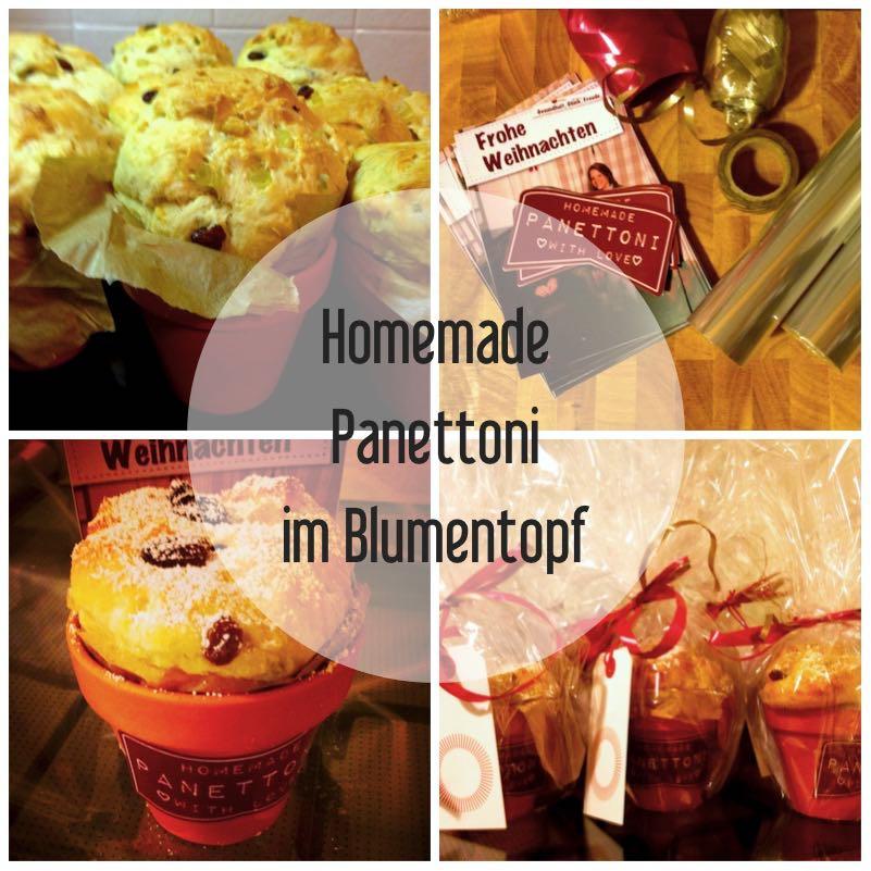 Homemade Panettoni im Blumentopf_2