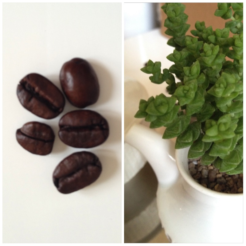 Urban Jungle Bloggers - Coffee & Plants2
