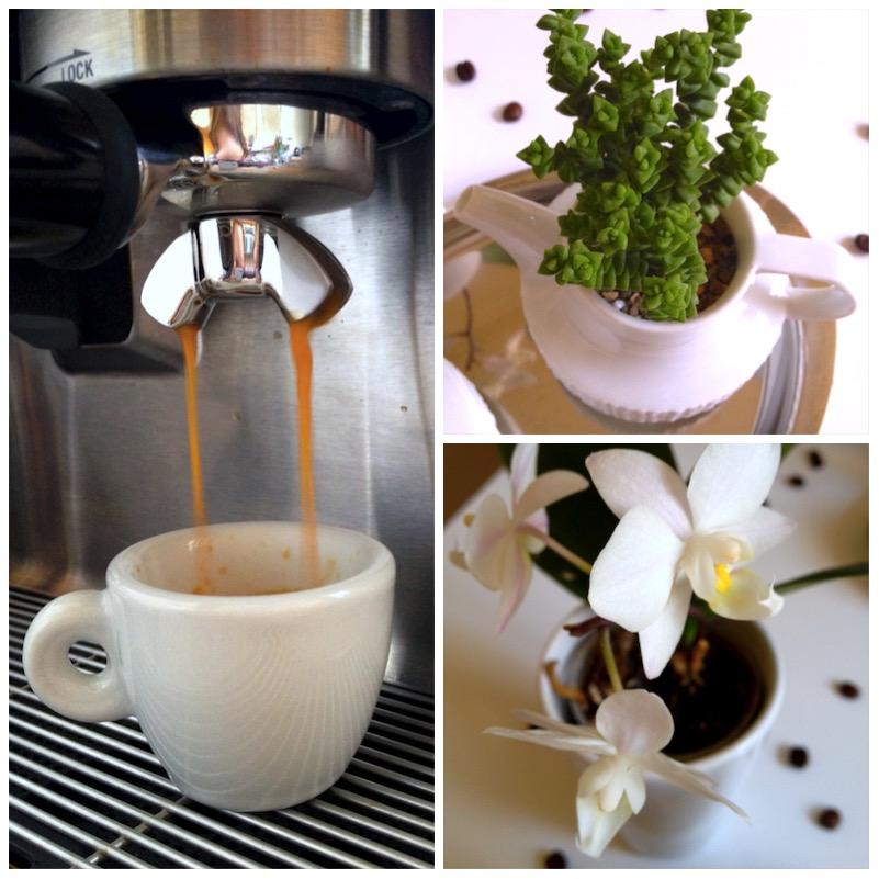 Urban Jungle Bloggers - Coffee & Plants3
