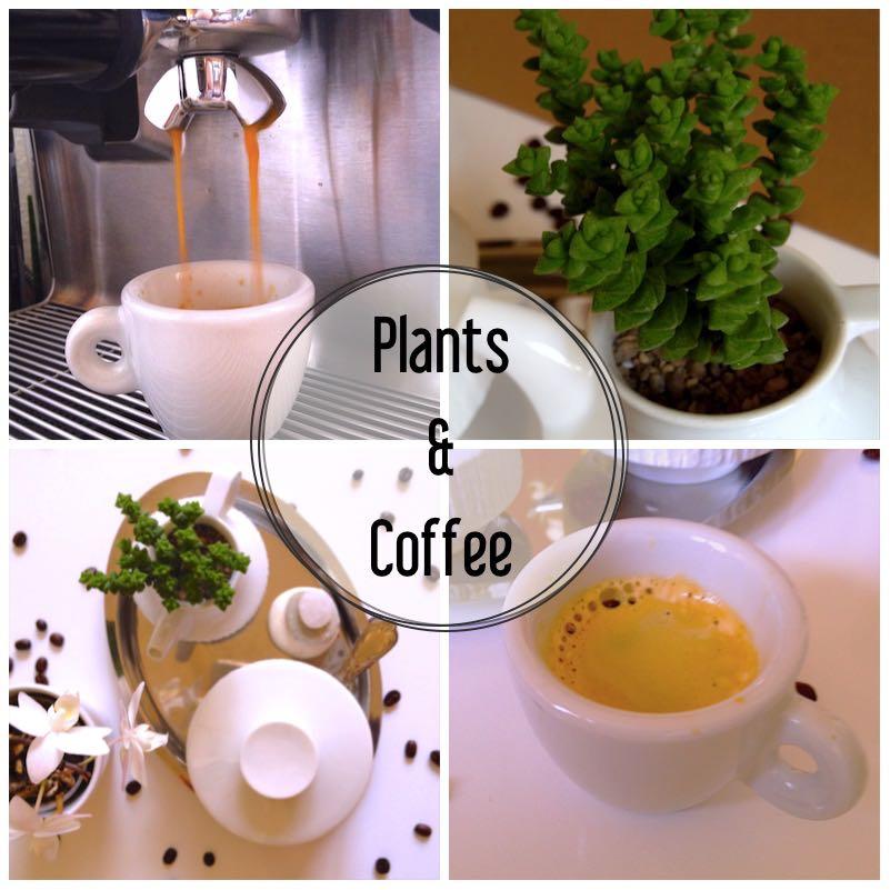 Urban Jungle Bloggers - Coffee & Plants4_1