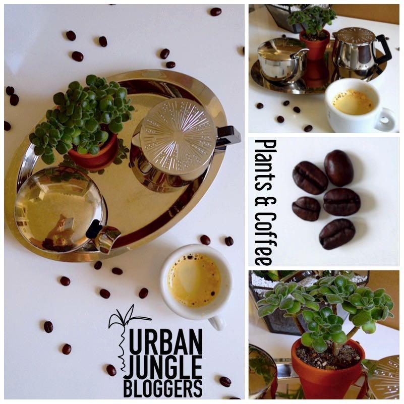 Urban Jungle Bloggers - Coffee & Plants6_1