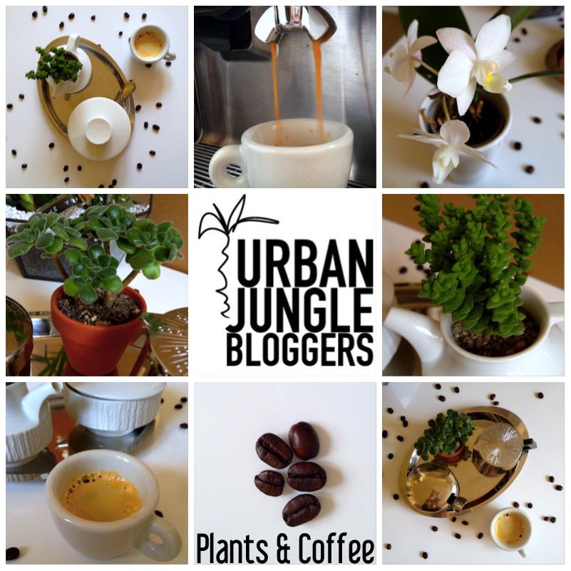 Urban Jungle Bloggers - Coffee & Plants7_1