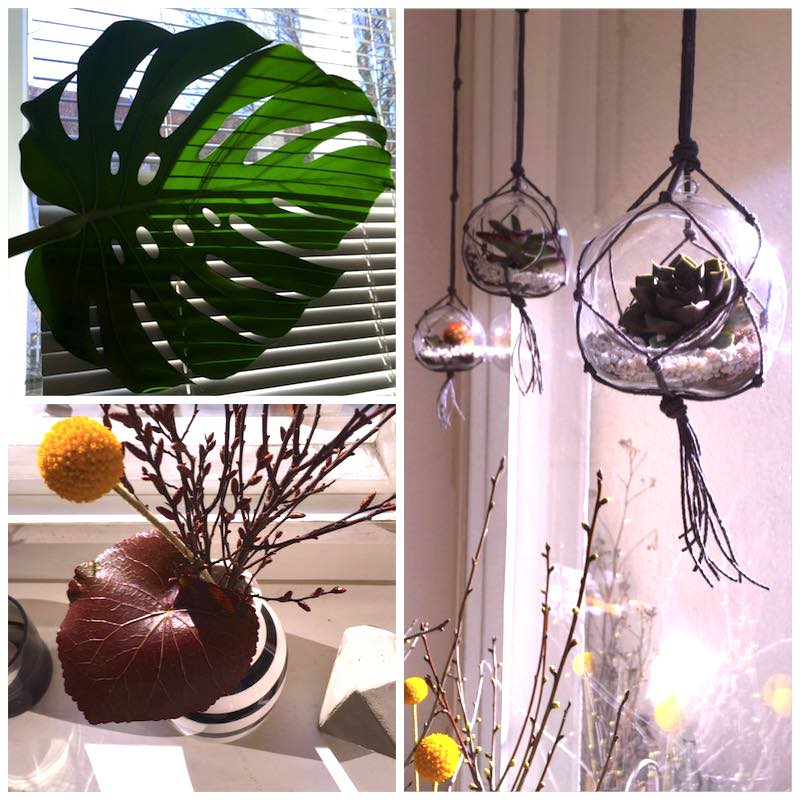 Urban Jungle Bloggers - Hanging Planters5