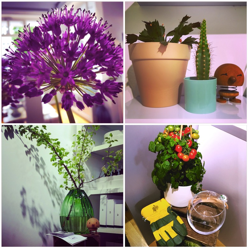 Green Living - Pressday im Conceptroom