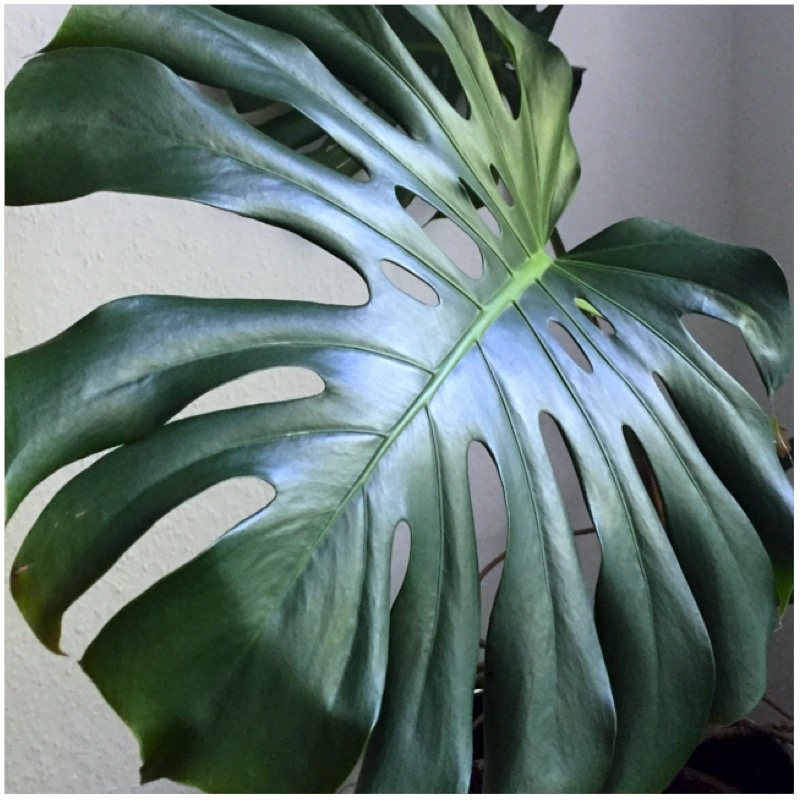 Urban Jungle Bloggers - My Plant Gang