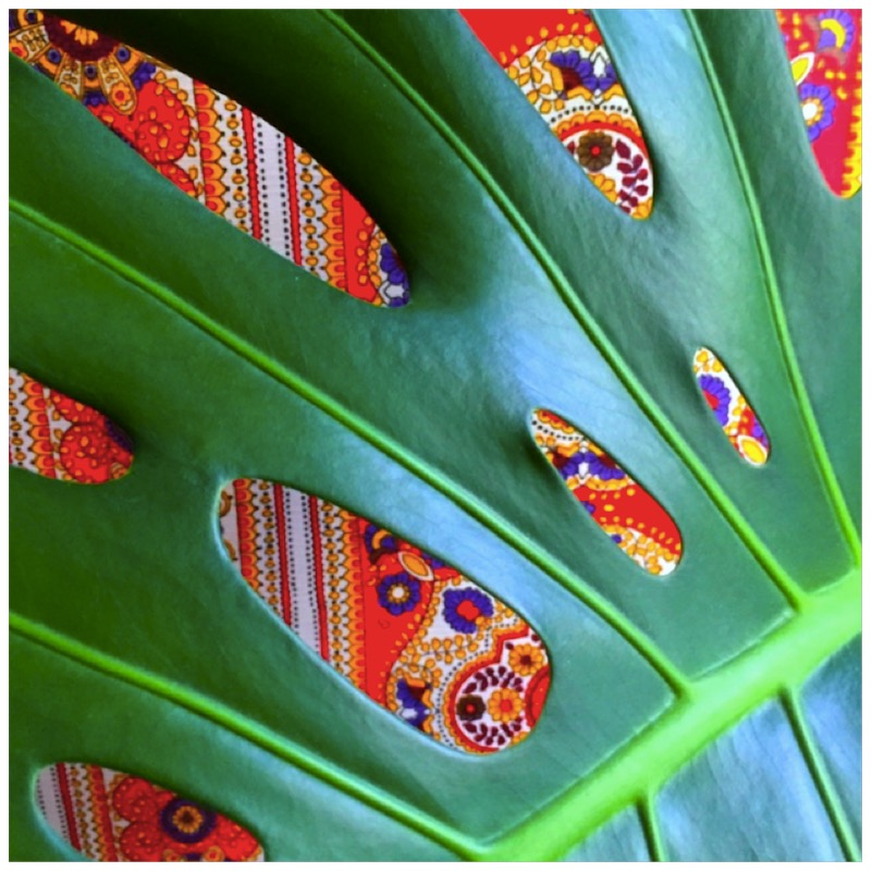 Urban Jungle Bloggers - Make Your Plant Pop