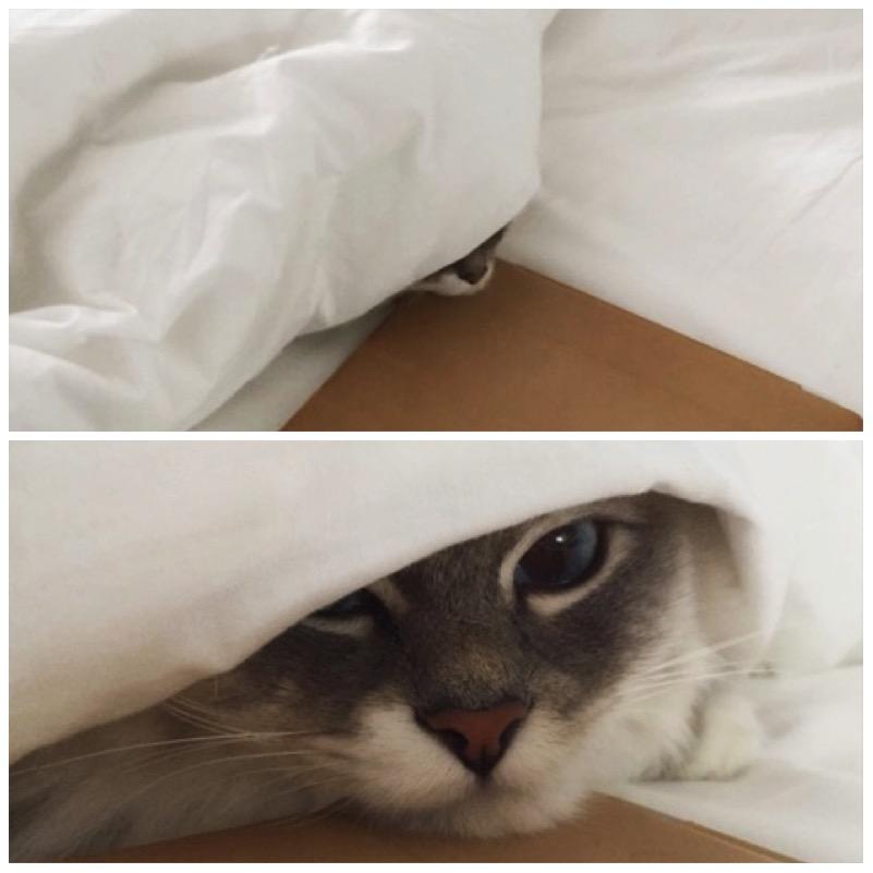 Die besten Katzenverstecke und 3 Gewinner2