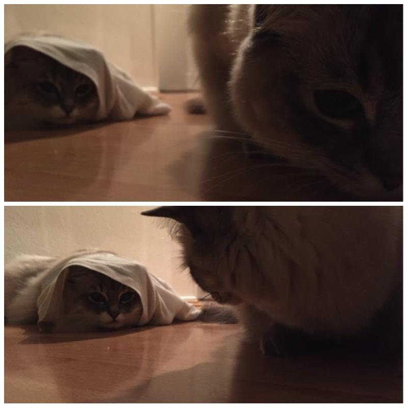 Die besten Katzenverstecke und 3 Gewinner3