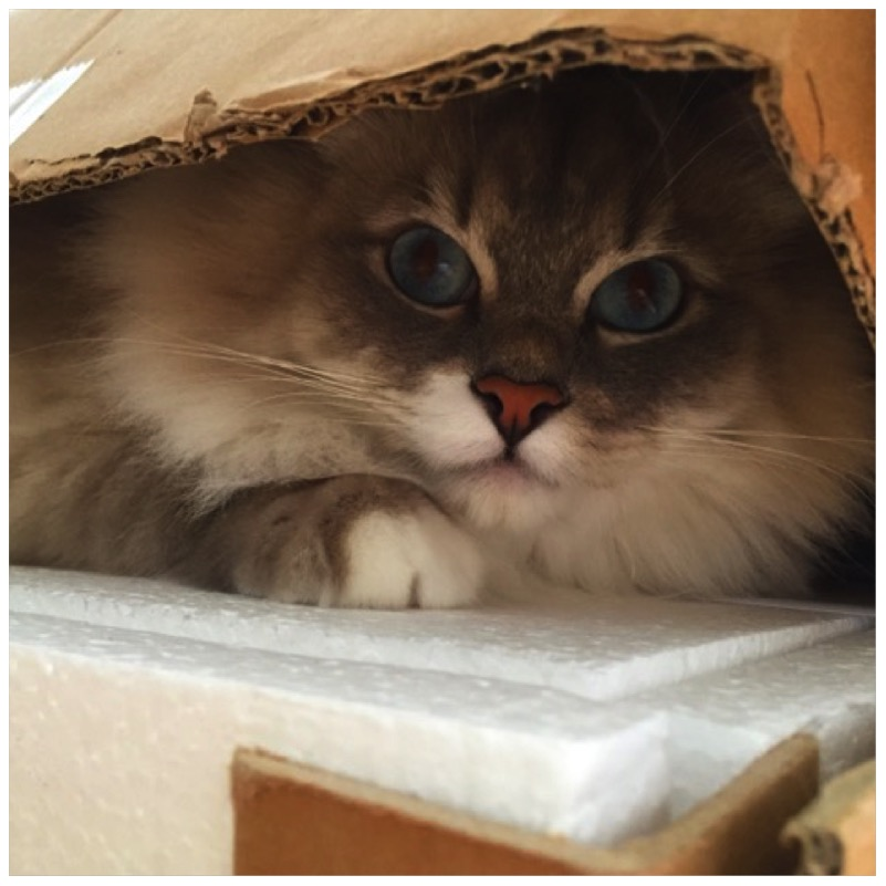 Die besten Katzenverstecke und 3 Gewinner4