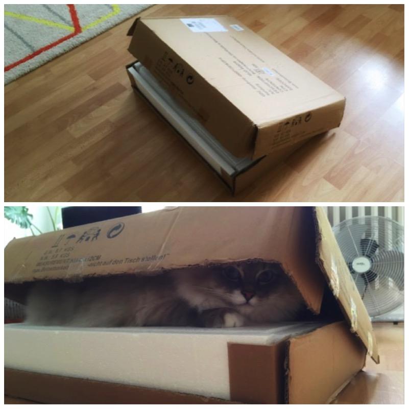 Die besten Katzenverstecke und 3 Gewinner5