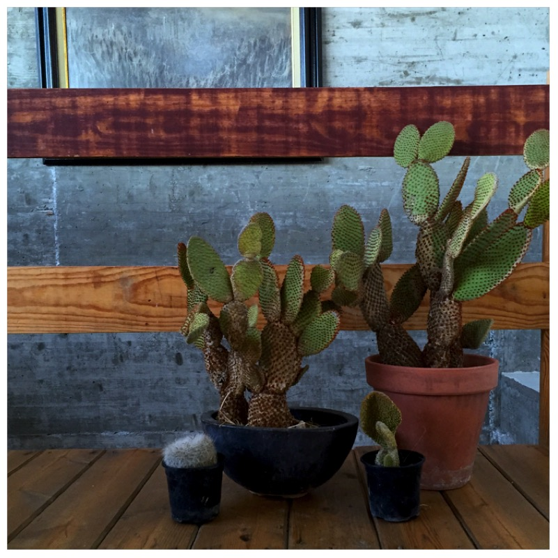 Plants & Art in Andalusien von eat blog love