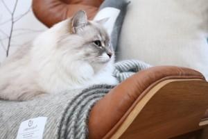 Cozy Trio - Mammoth Chair meets Penguin & Gotland von eat blog love