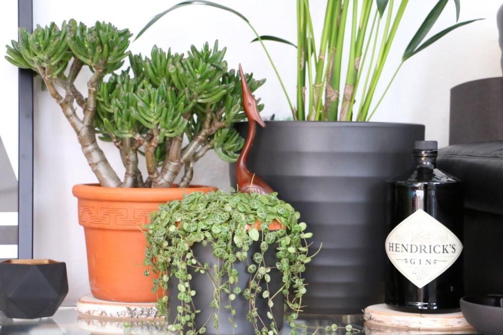 Cats & Plants - Katzen und die grüne Versuchung by eat blog love_10
