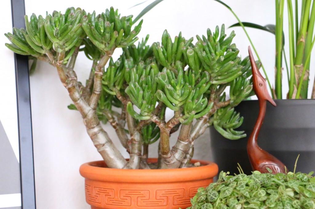 Cats & Plants - Katzen und die grüne Versuchung by eat blog love_15