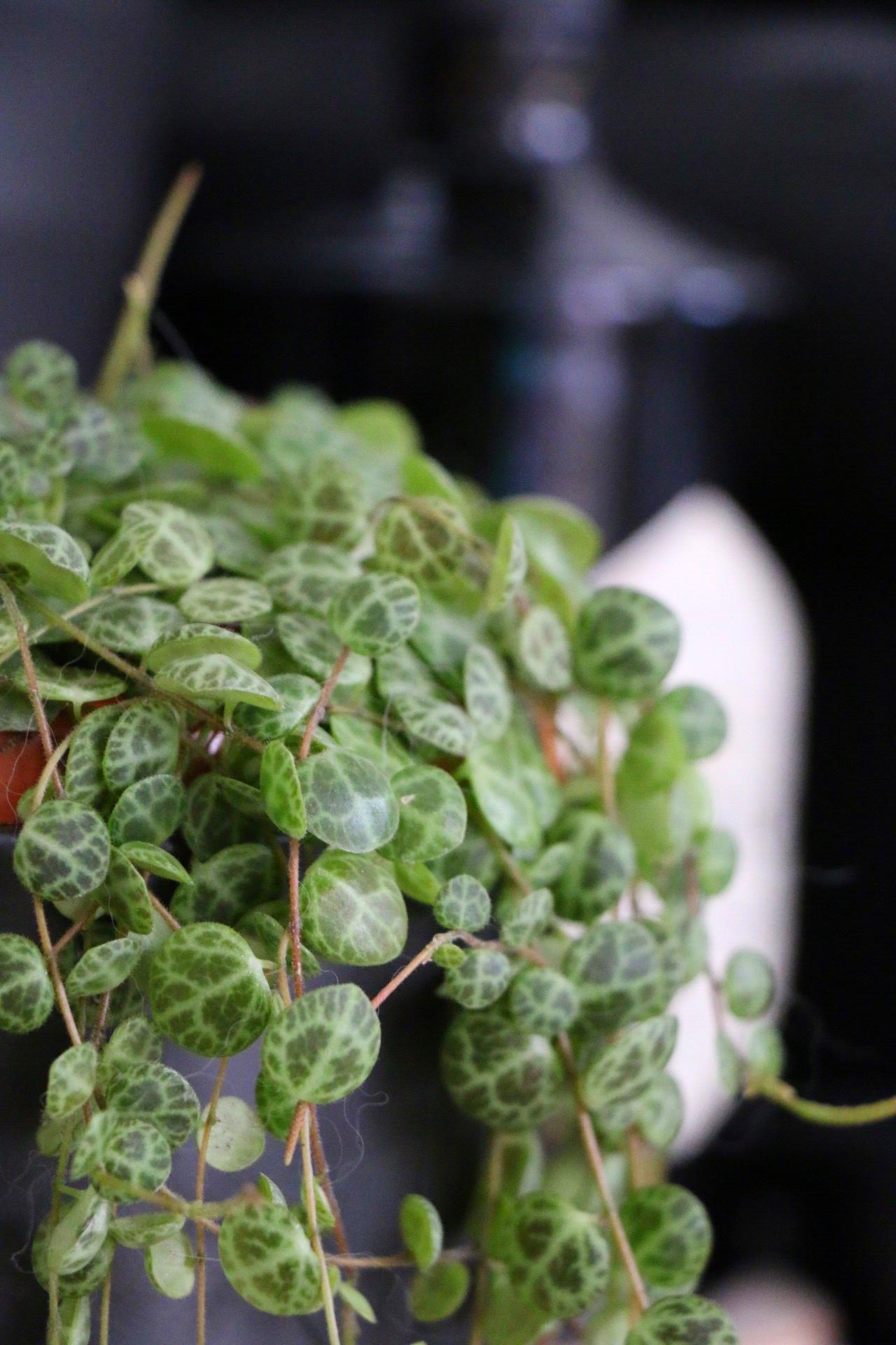 Cats & Plants - Katzen und die grüne Versuchung by eat blog love_17