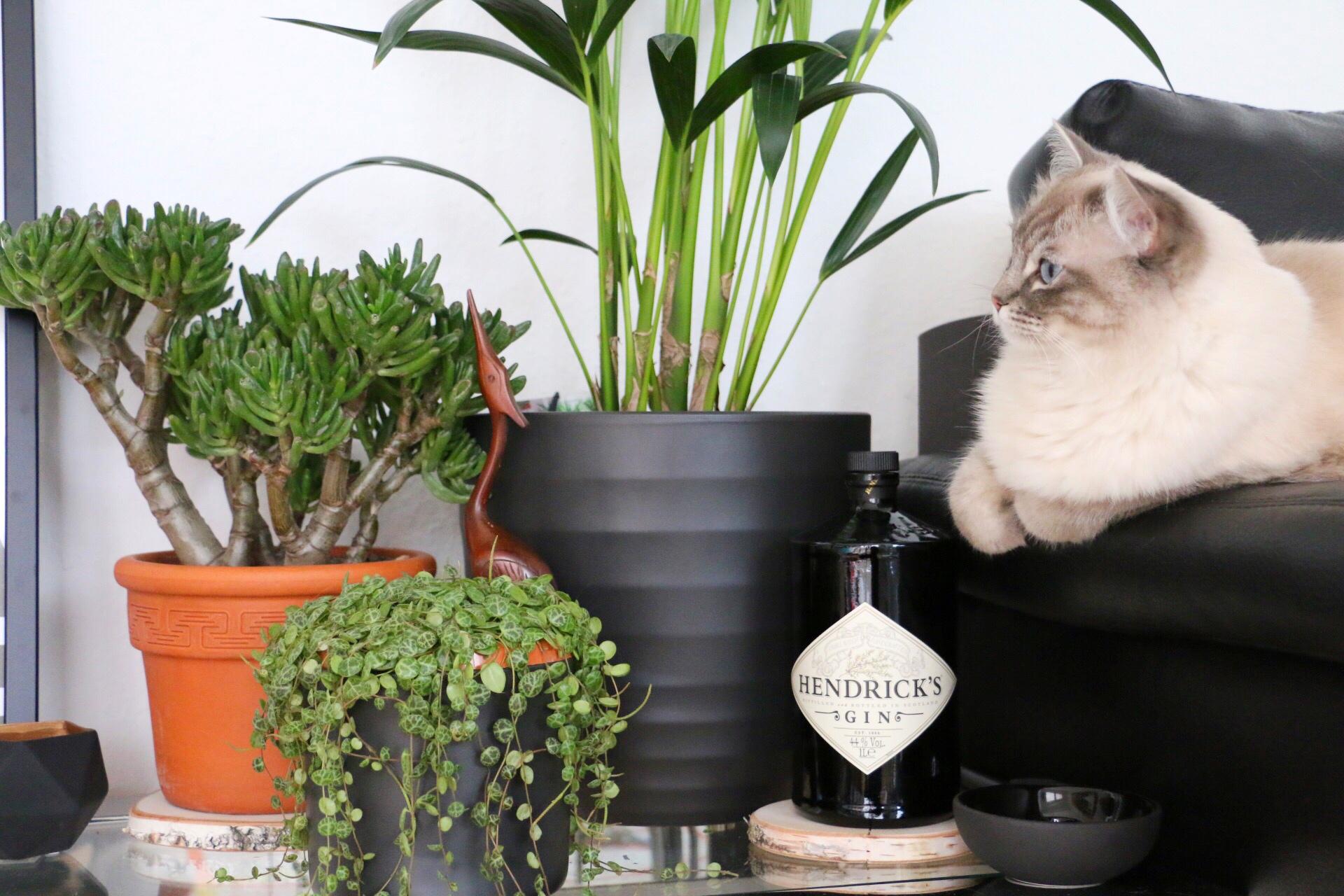 Cats & Plants - Katzen und die grüne Versuchung