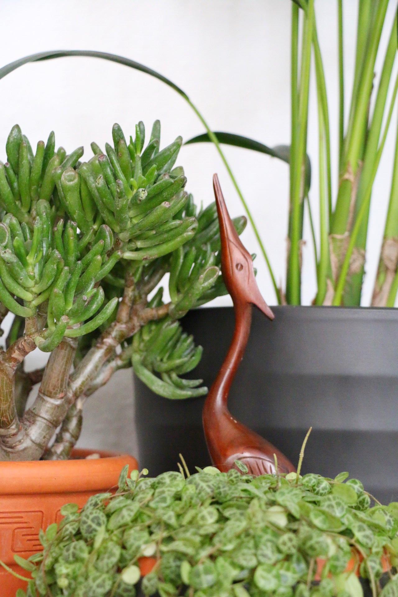 Cats & Plants - Katzen und die grüne Versuchung by eat blog love_8