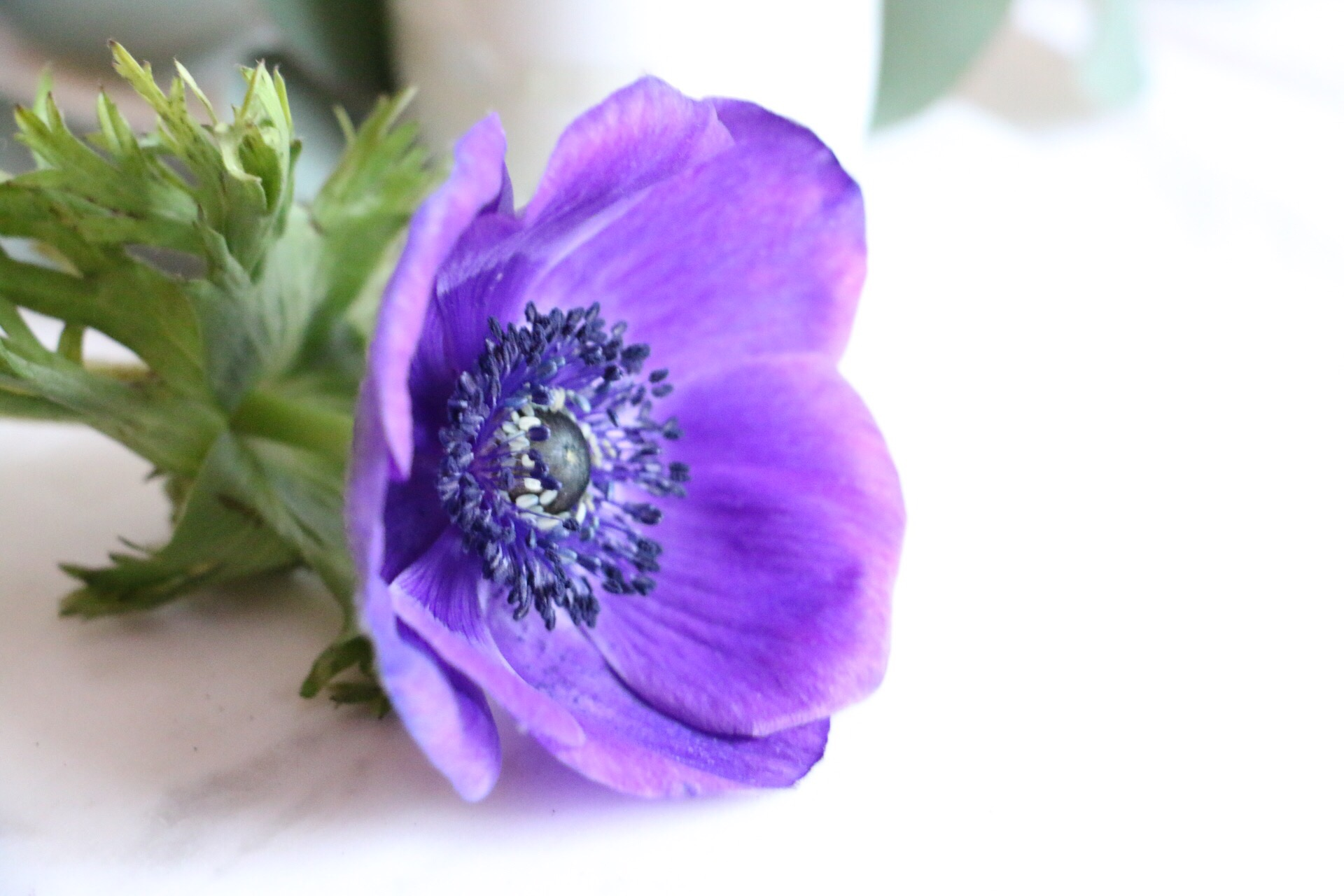 Frühlingserwachen by eat blog love