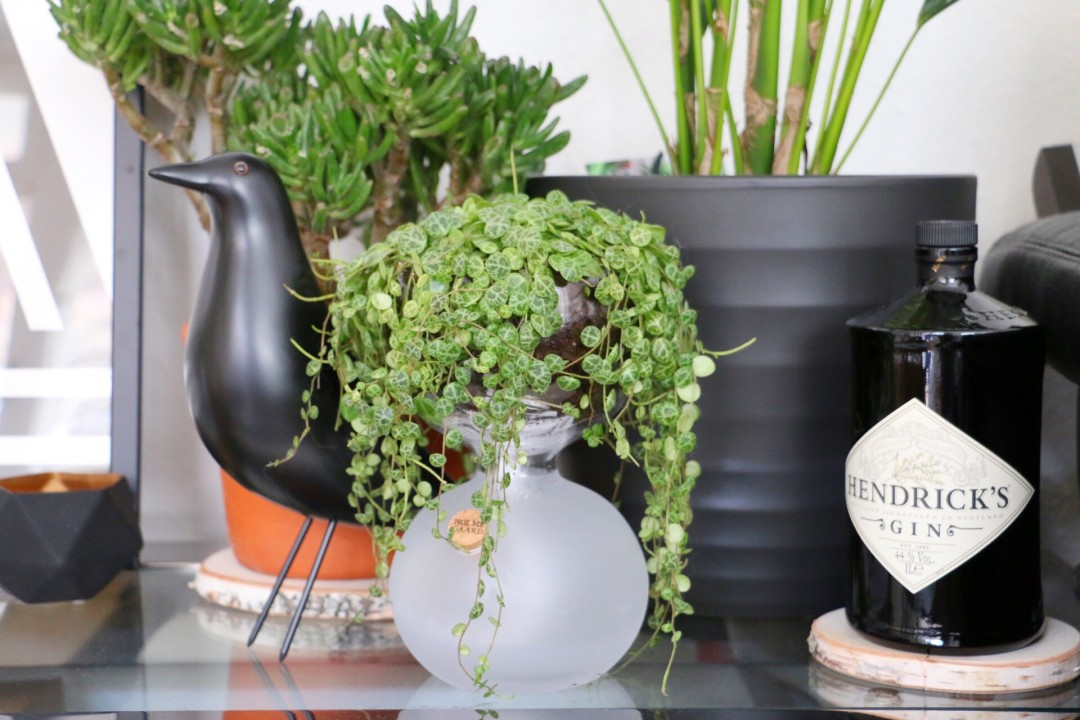 Urban Jungle Bloggers - Plants & Glass by eat blog love