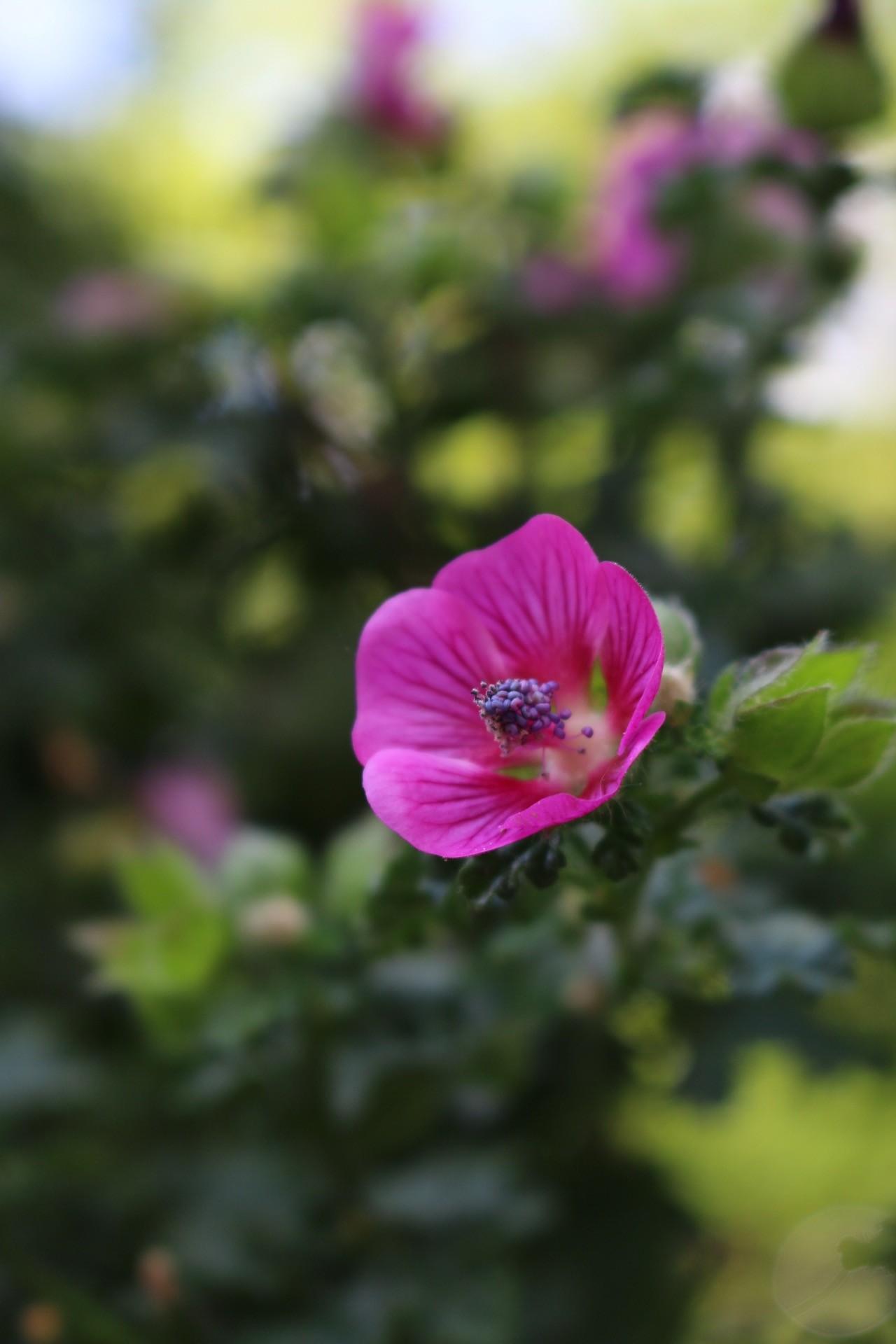 Blumenmeer und Lichterglanz zum Muttertag von eat blog love
