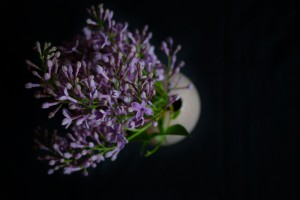 Eine Ode an den Flieder by eat blog love