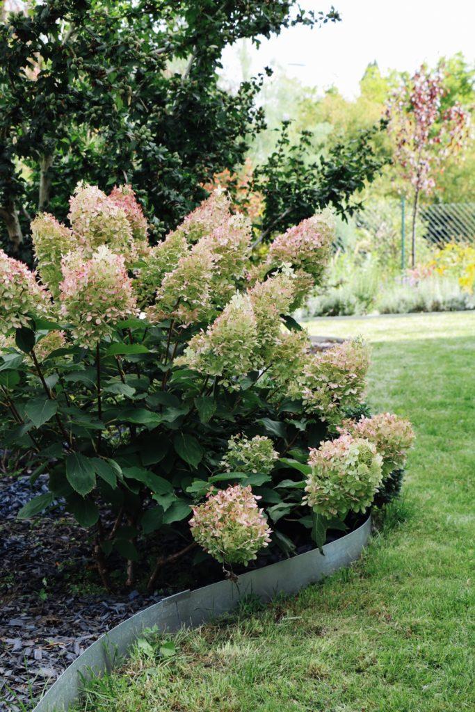 Garden Makeover: Vorher-Nachher unseres Vorgartens by eat blog love_4