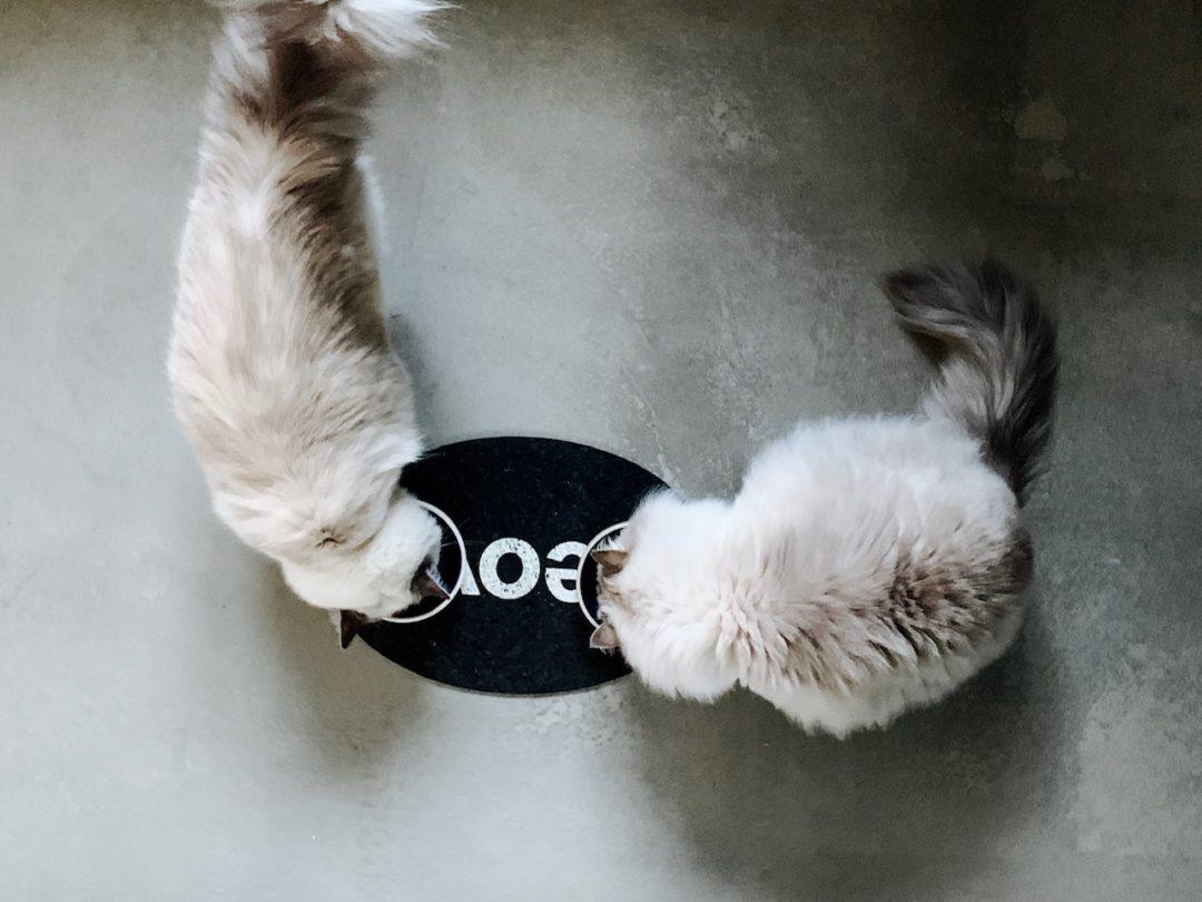 5 Zeichen, dass es meinen Katzen schmeckt von eat blog love