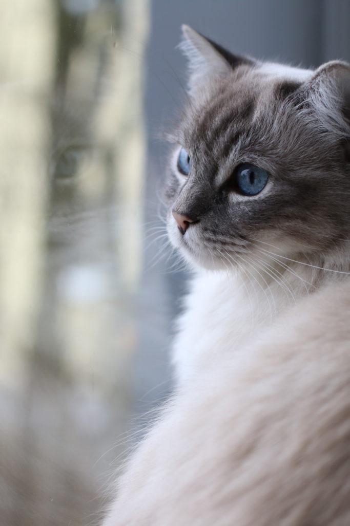 10 Gründe, warum ich unsere Katzen so liebe by eat blog love