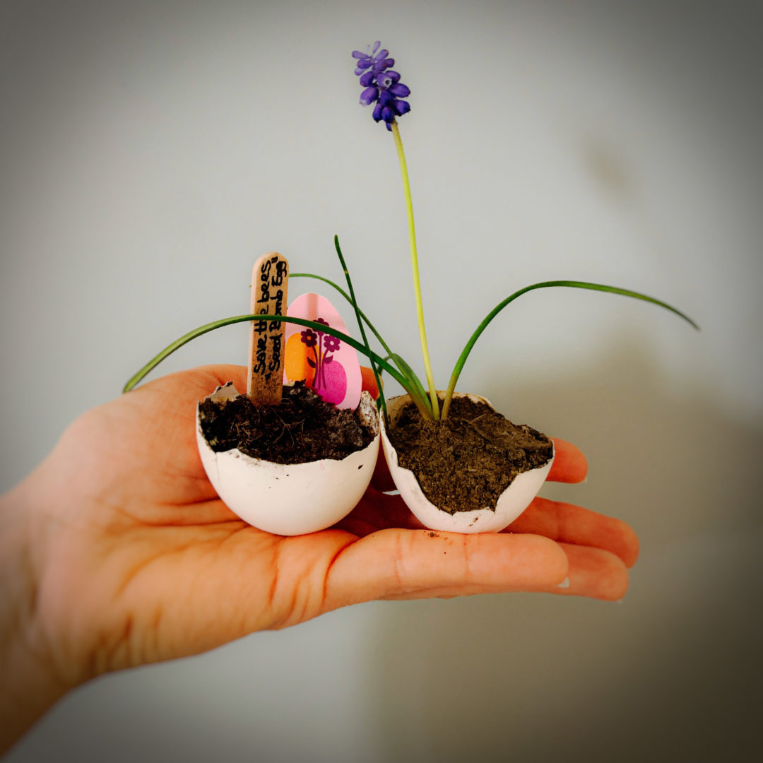 Save the bees: DIY Seed Bomb Eggs für Ostern by eat blog love